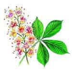 icon-horse-herb