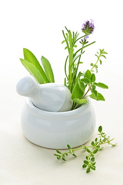 herbal medicine schools online